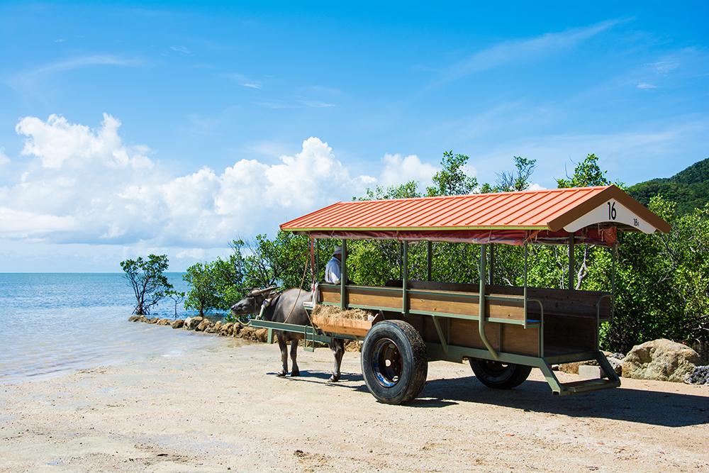 由布島と水牛車