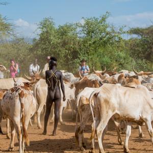 ハマル族の牛飛びの儀式