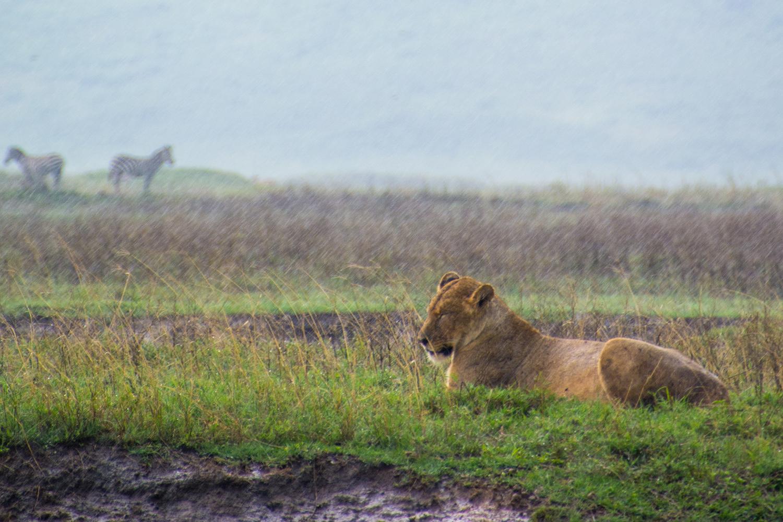 ンゴロンゴロ保全地域の画像 p1_35