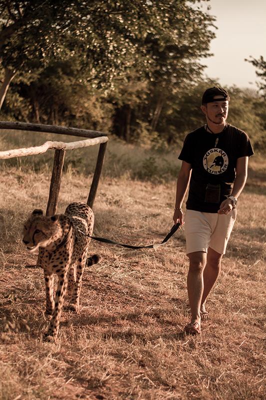 チーターの散歩