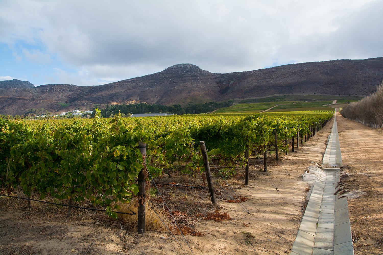 南アフリカのワイナリー